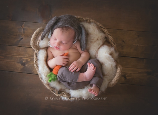 Buffalo Newborn Photographer| Little Cow   |Gypsy's Corner Photography