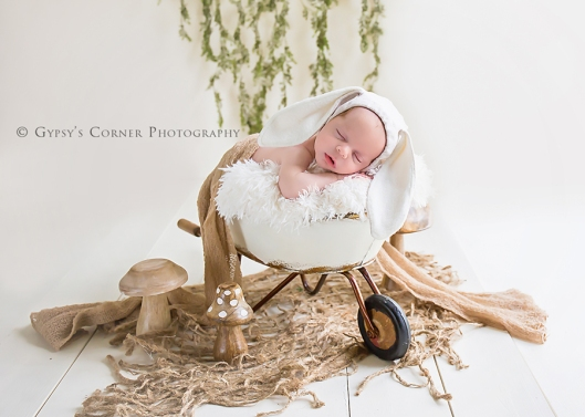 Buffalo Newborn and Baby Photographer|Baby bunny in wheelbarrow|Gypsy's Corner Photography-56Web